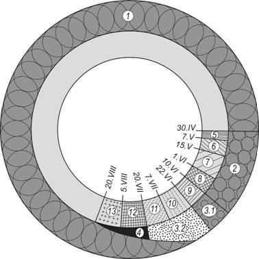Схема онтогенеза и