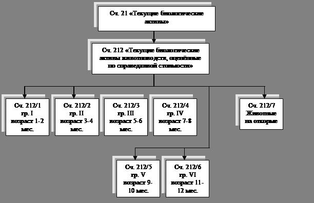 ОТЧЕТ О производственной практике по финансовому учету в СПК  Схема субсчетов применяемая предприятием к счету 21 Текущие биологические активы представлена на рис 2 14